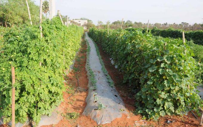 Young farmer's initiative in Nalgonda