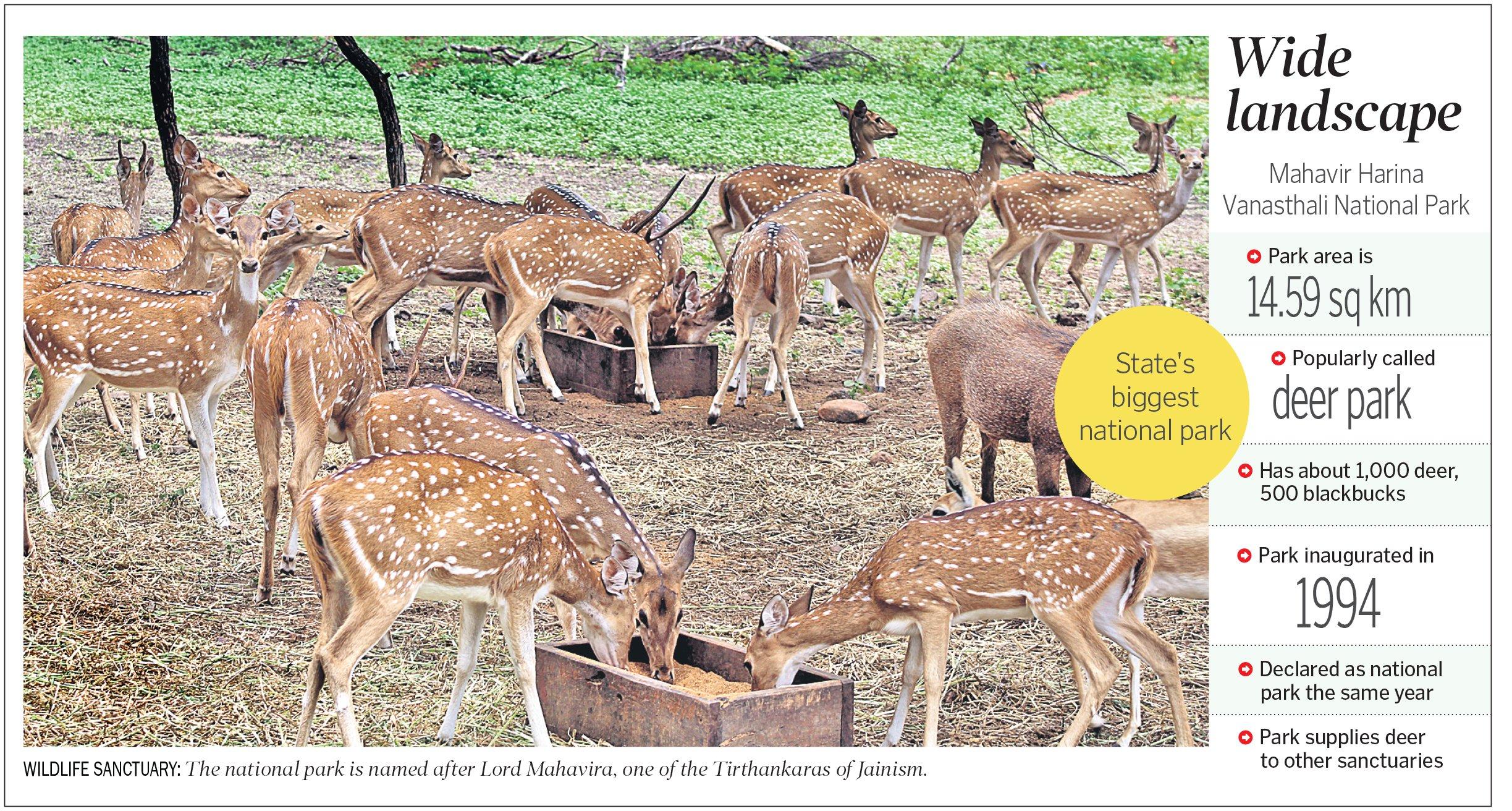 Mahavir Harina Vanasthali National Park, a perfect gateway