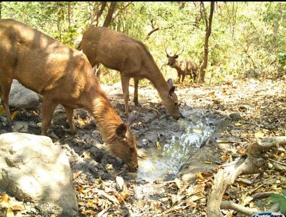 Foresters' efforts bring respite to wildlife in Asifabad