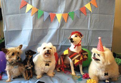 Have a doggie birthday