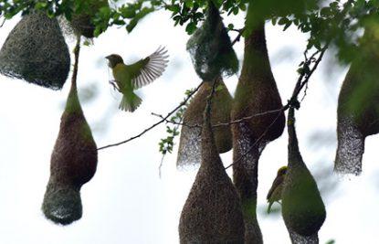 Birdwatchers' delight