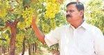 Harvestinga Padma Shri withinnovation
