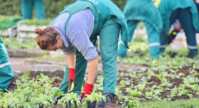 Gardening, walking preserve women's mobility during aging: Study - Telangana Today