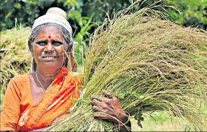 Hyderabad-based 'Millet Bank'