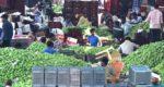 Buying mangoes