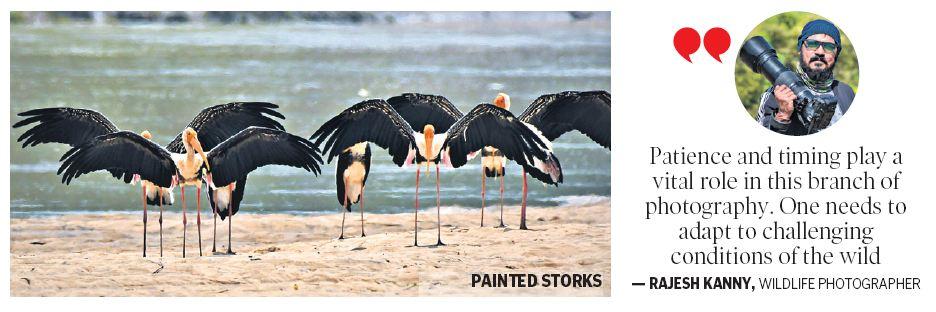 a birder's paradise
